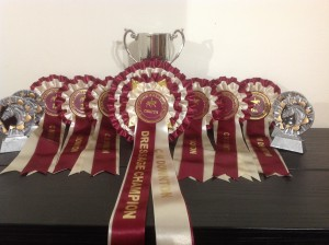 Cup and rosettes ready and waiting!